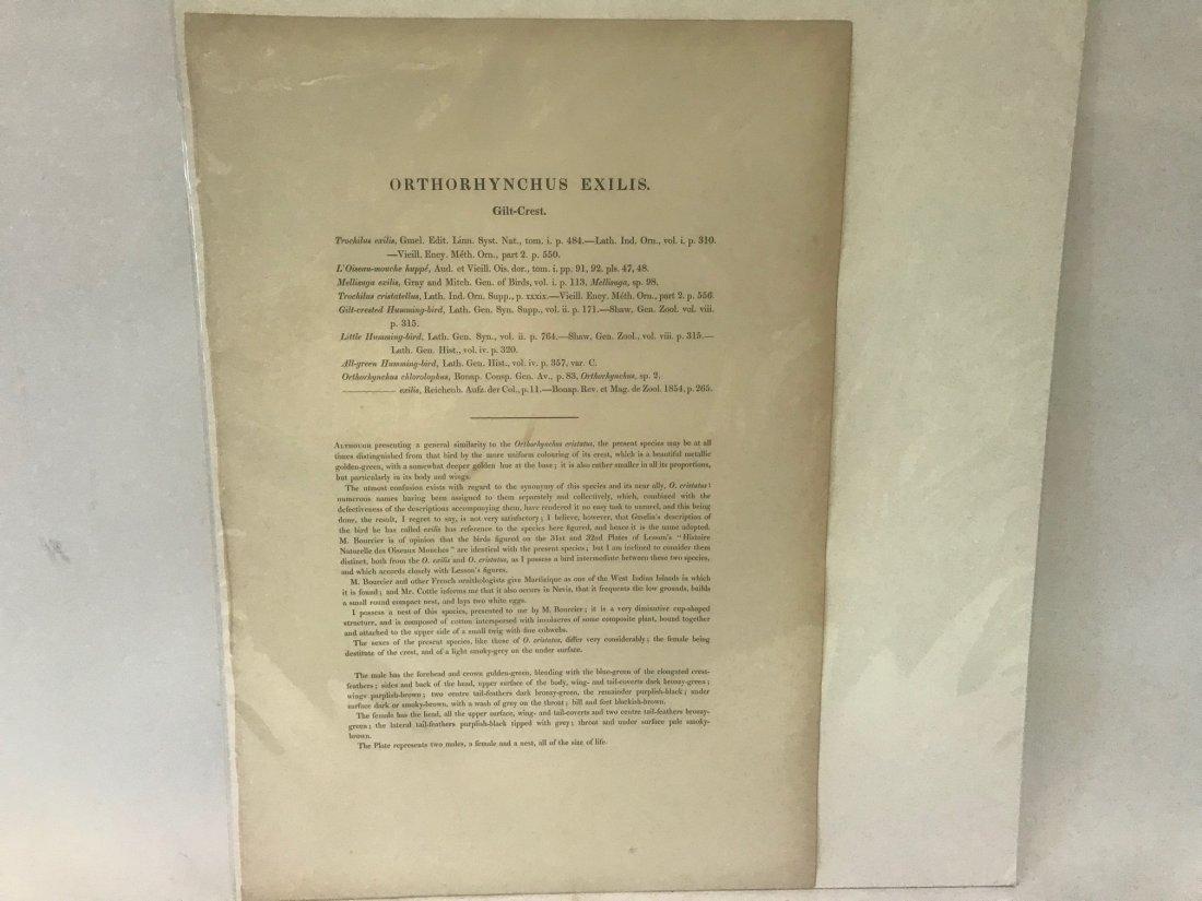 J.Gould H.C.Richter. Gilt-Crest Lithograph - 2