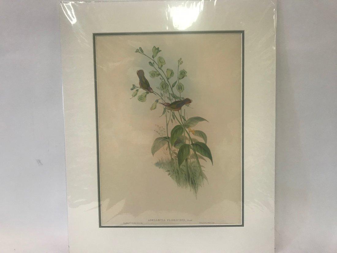 J.Gould H.C.Richter. Blossom-crown