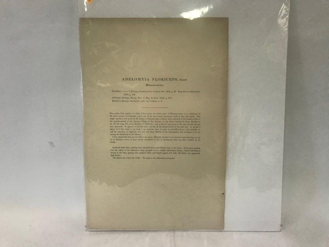 J.Gould H.C.Richter. Blossom-crown - 2