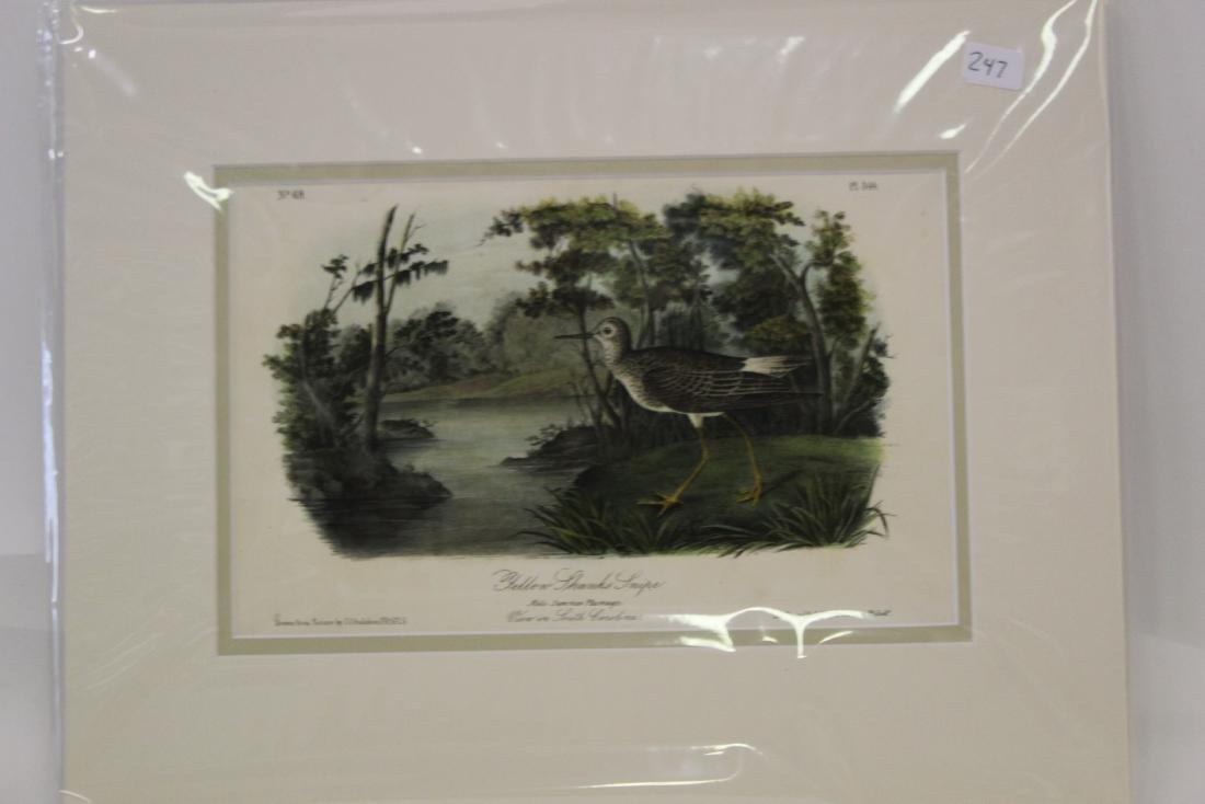 Audubon First Ed. Aquatint. Yellow Shanks Snipe