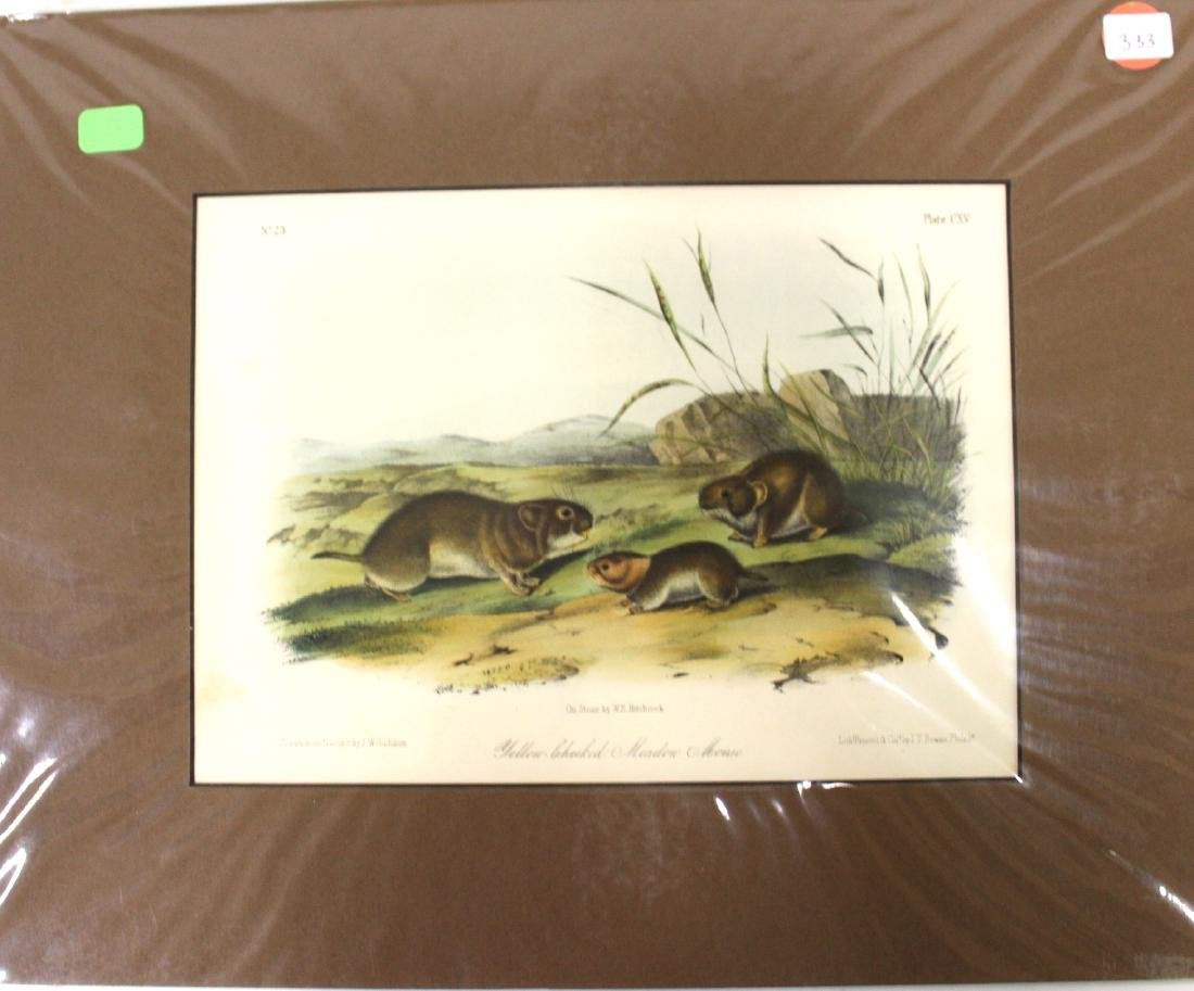 Audubon First Edition Aquatint Yellow-cheeked Meadow
