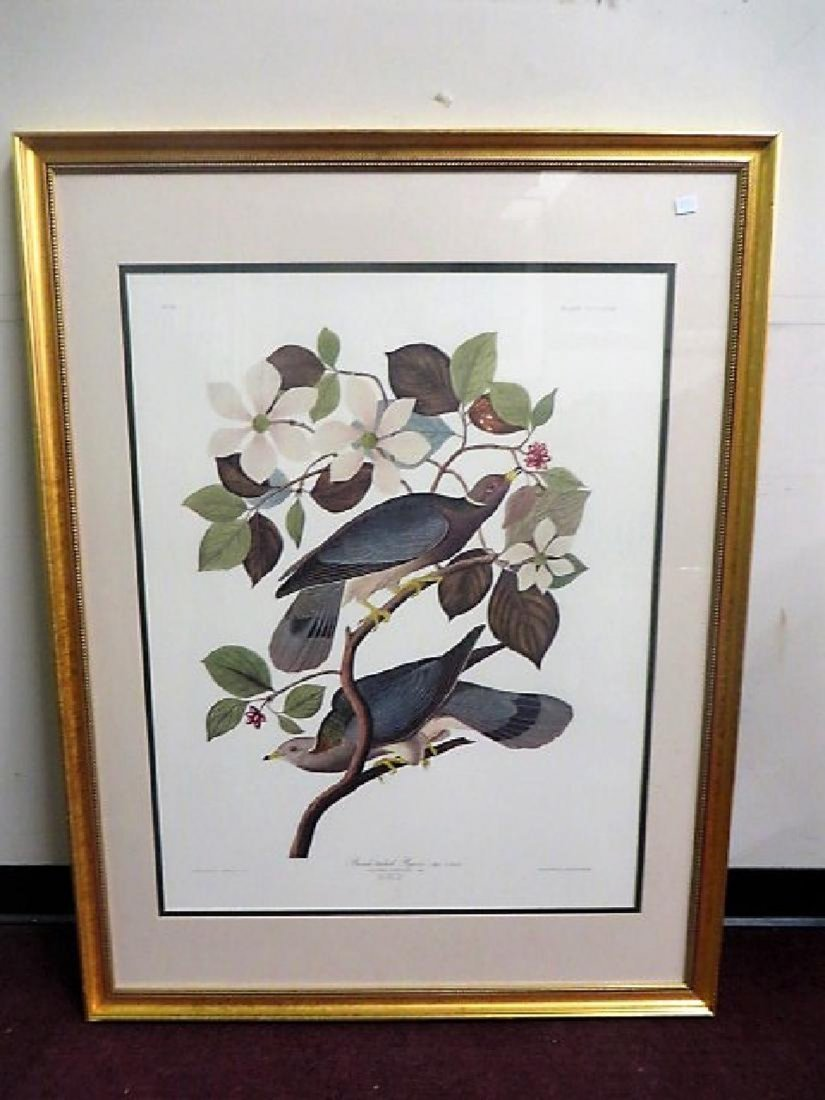 Audubon Large Folio First Edition Band-Tailed Pigeon
