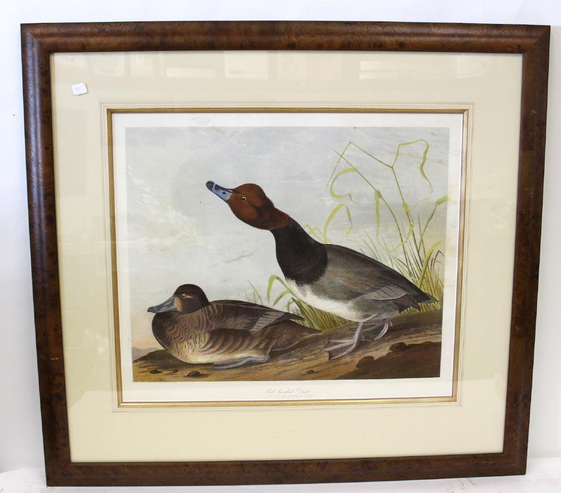 J.J Audubon First ed. Aquatint Red Headed Duck