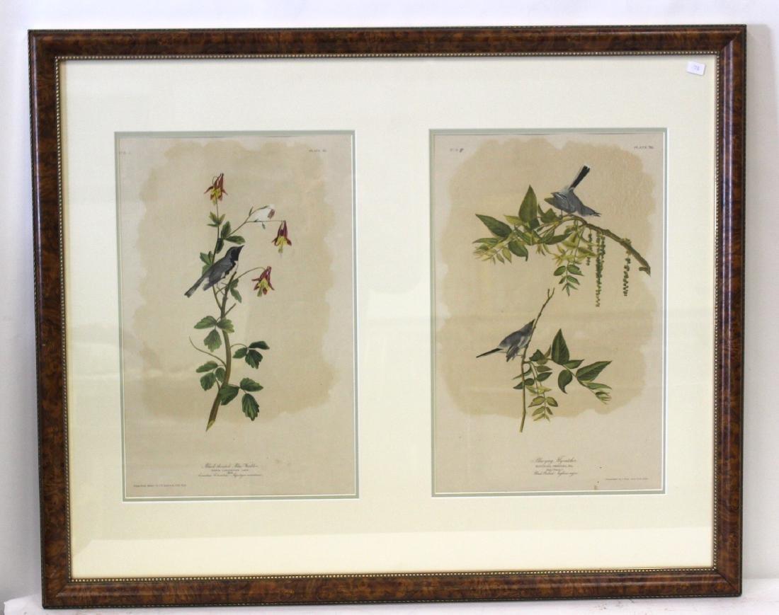 J.J Audubon Plate 95, Plate 70