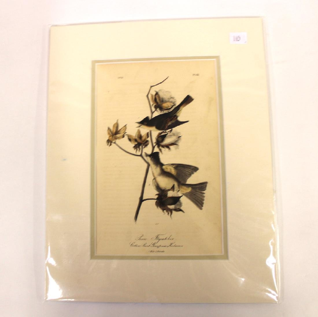 J.J Audubon Aquatint Peewee Flycatcher