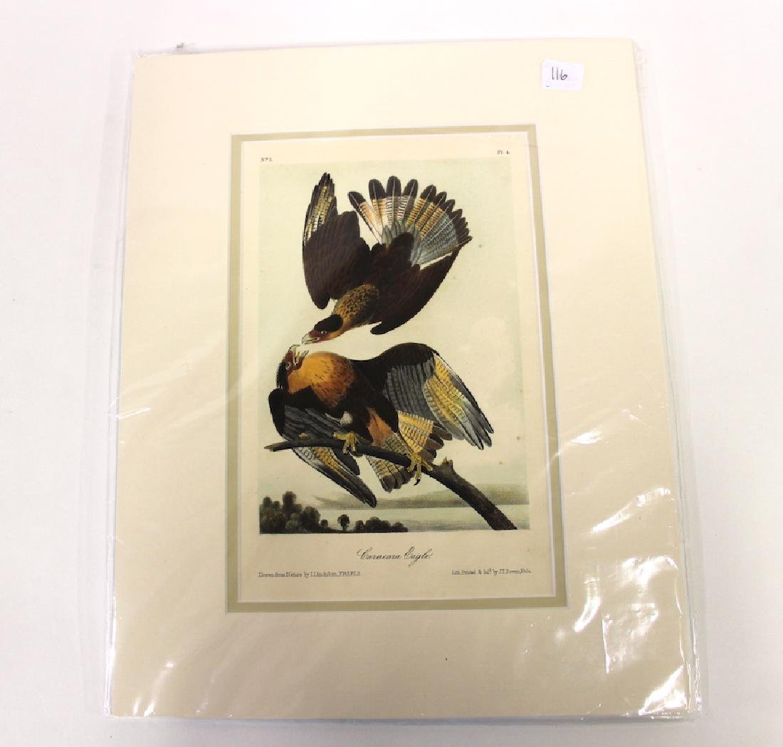 J.J Audubon Aquatint Caracara Eagle