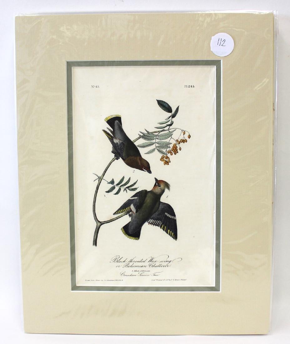 Audubon. Black Throated Wax-Wing or