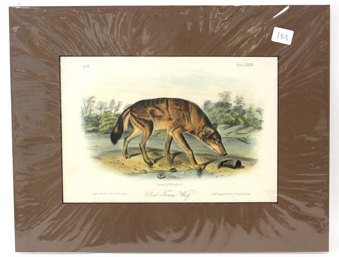 J.J Audubon First ed. Aquatint Red Texan Wolf