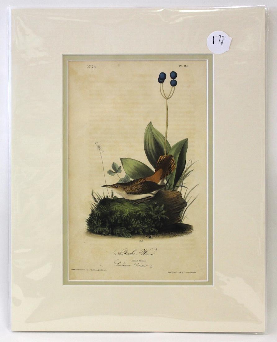 Audubon. Rock Wren No.116