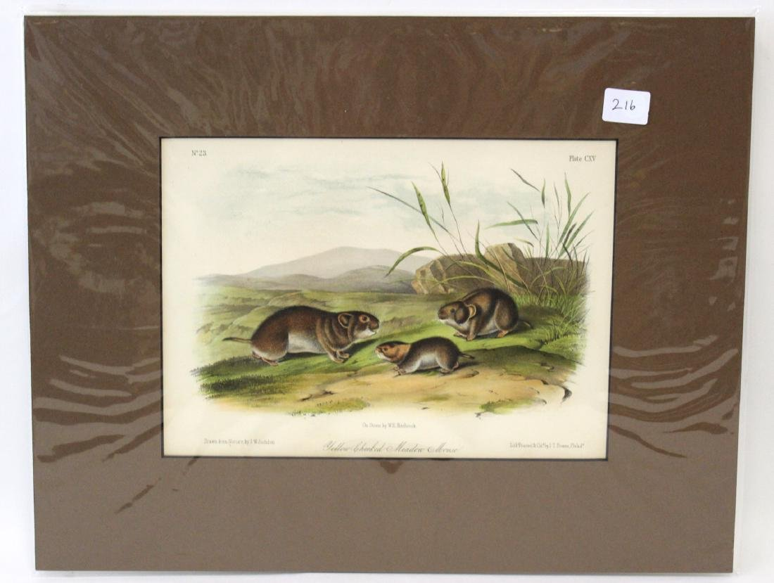 J.J Audubon First ed. Aquatint Yellow-Cheeked Meadow