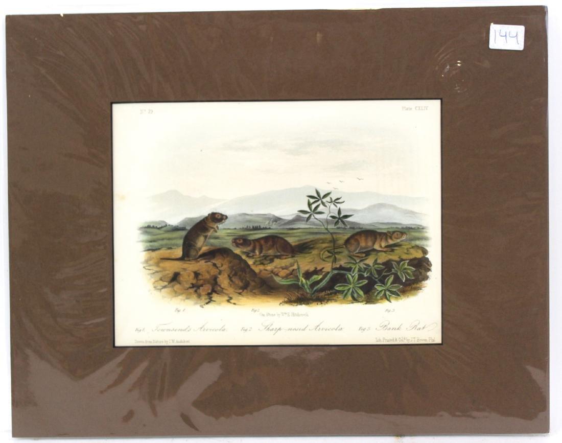 J.J. Audubon. Octavo. Townsend's Arvicola.
