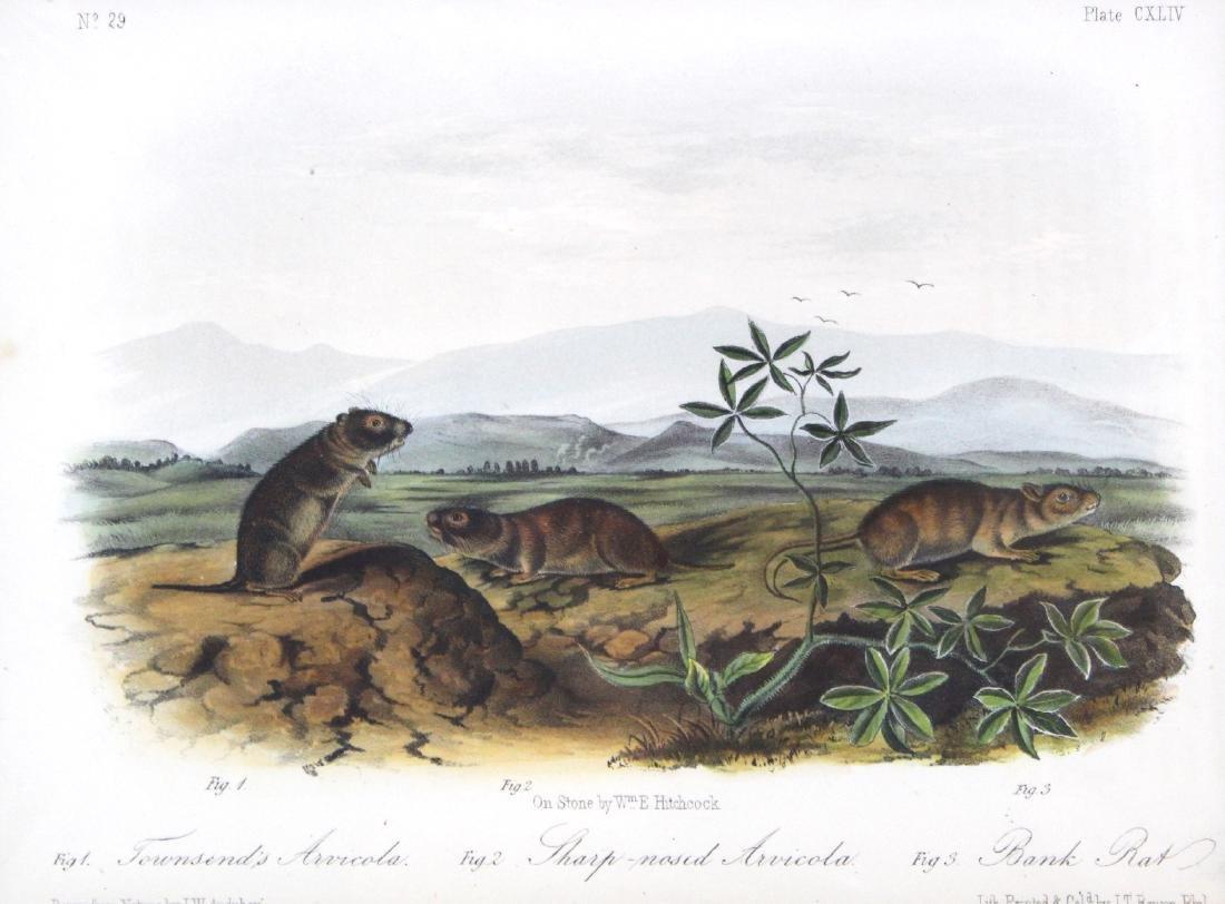 J.J. Audubon. Octavo. Townsend's Arvicola. - 2