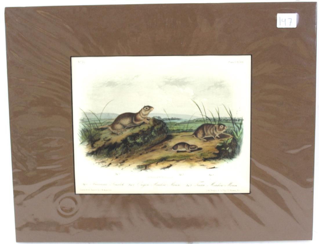 J.J. Audubon. Octavo. American Souslik or Meadow