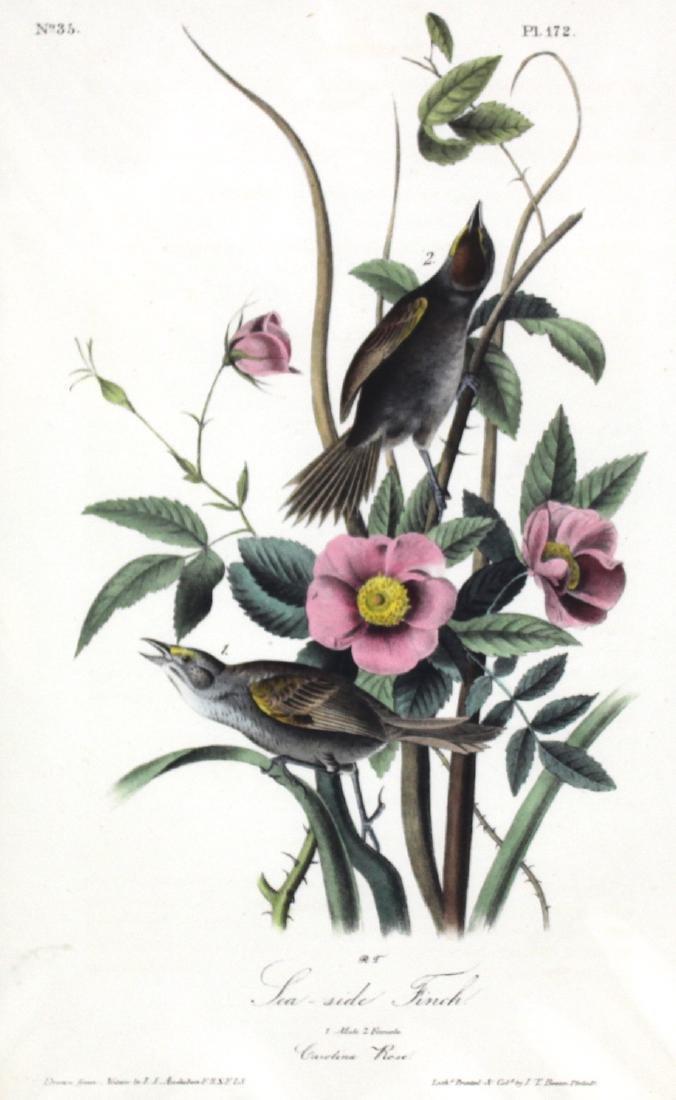J.J. Audubon. Octavo. Sea-Side Finch - 2