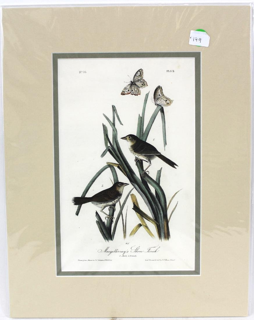 J.J. Audubon. Octavo. Macgillivrays Shore Finch