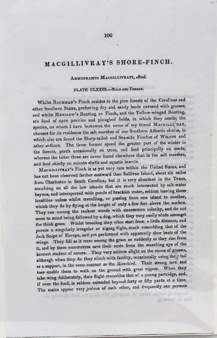 J.J. Audubon. Octavo. Macgillivrays Shore Finch - 3