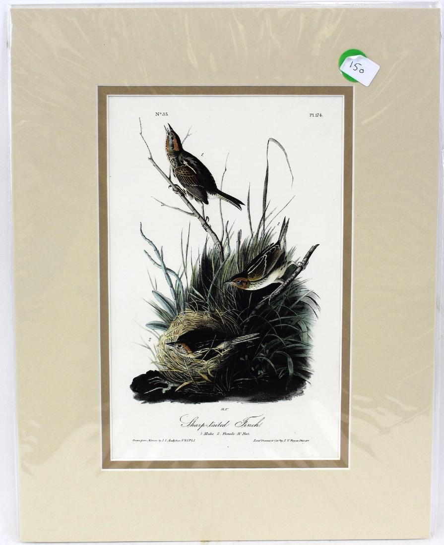 J.J. Audubon. Octavo. Sharp Tailed Finch