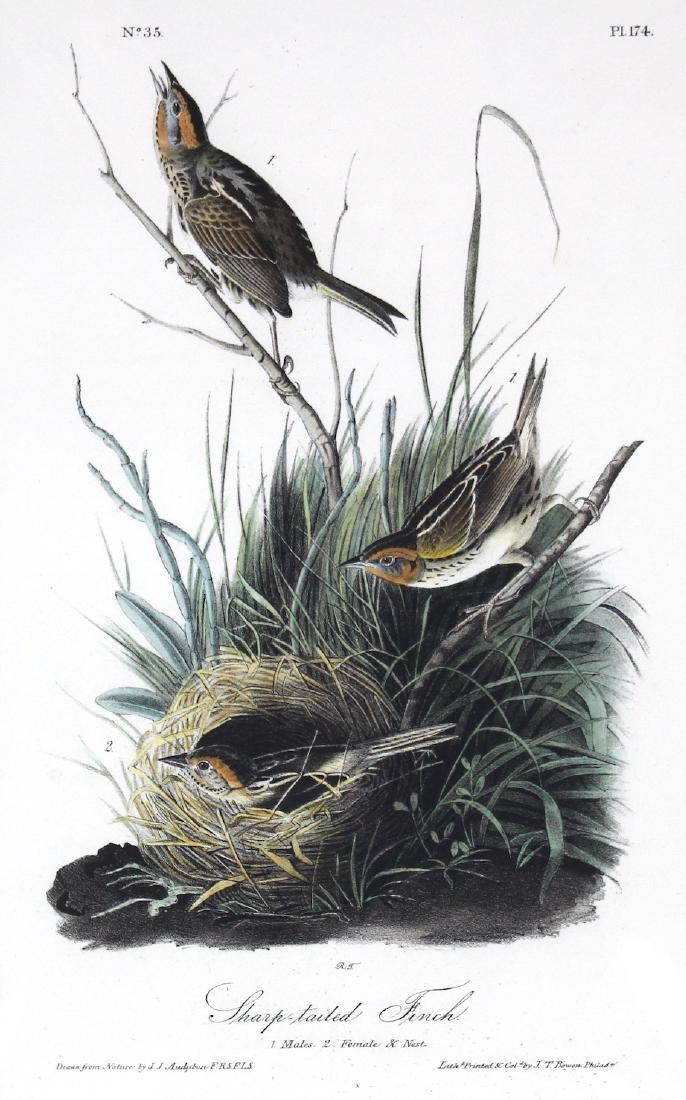 J.J. Audubon. Octavo. Sharp Tailed Finch - 2