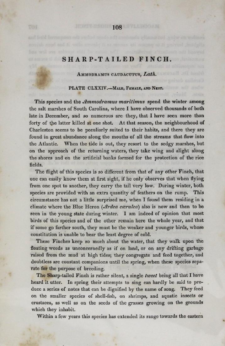 J.J. Audubon. Octavo. Sharp Tailed Finch - 3