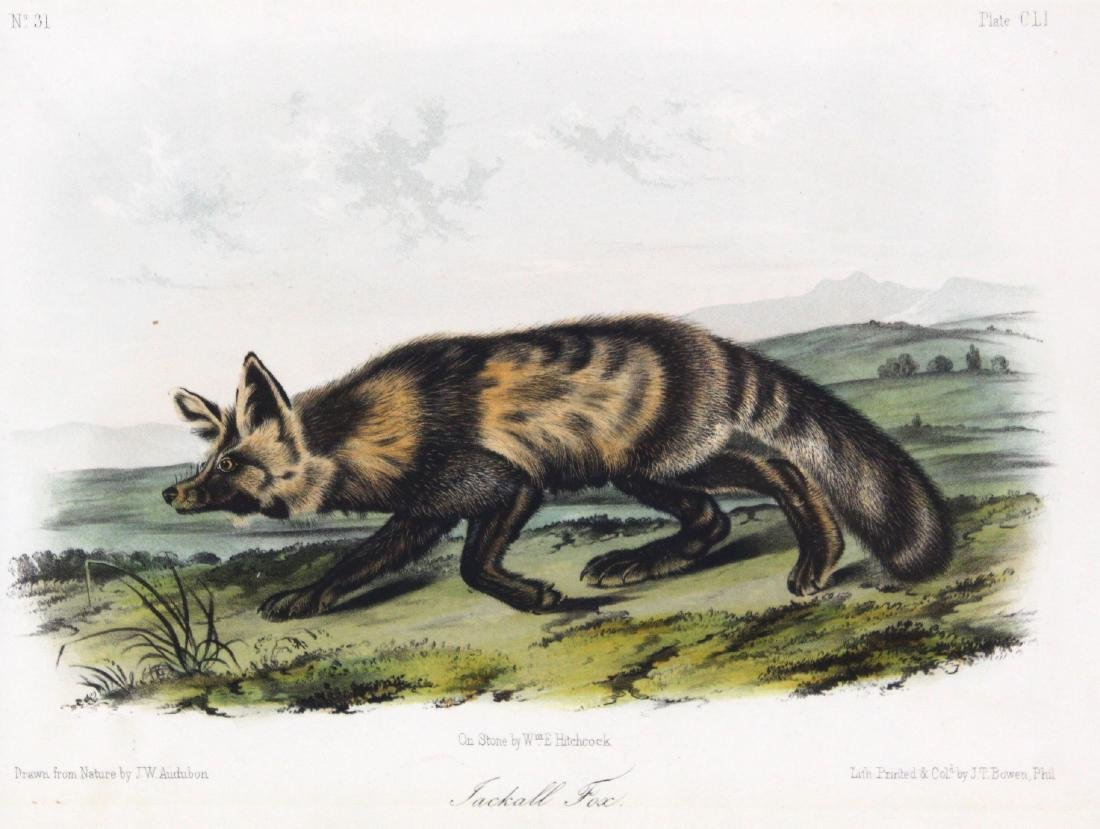 J.J. Audubon. Octavo. Jackall Fox. - 2