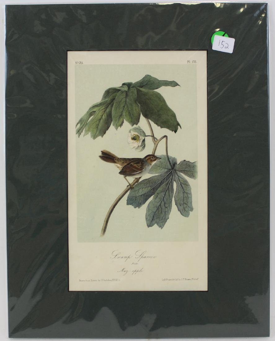 J.J. Audubon. Octavo. Swamp Sparrow