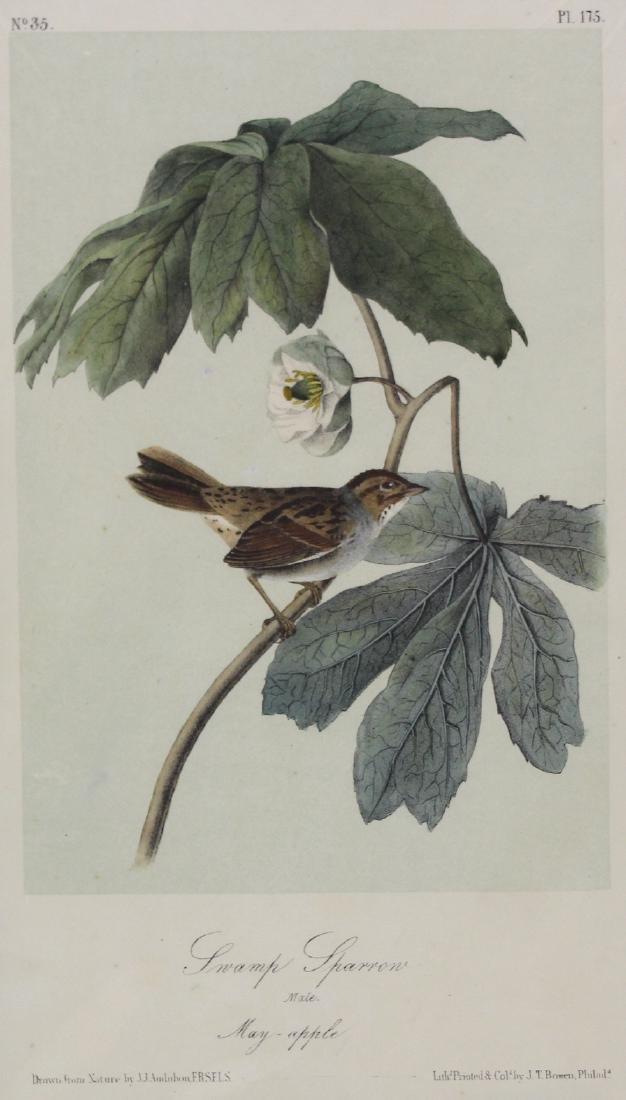 J.J. Audubon. Octavo. Swamp Sparrow - 2