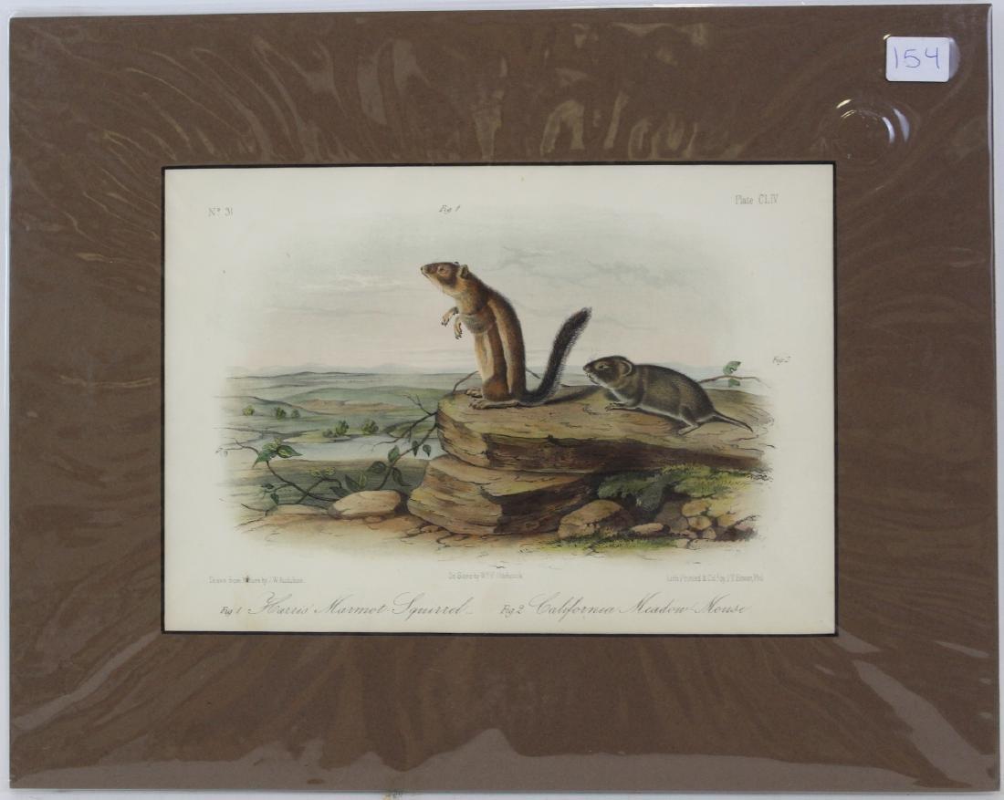 J.J. Audubon. Octavo. Harris's Marmot Squirrel.