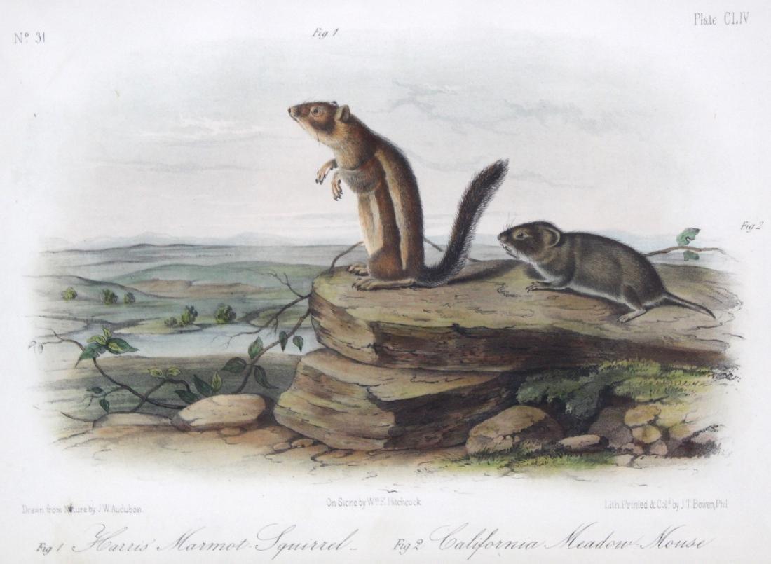 J.J. Audubon. Octavo. Harris's Marmot Squirrel. - 2