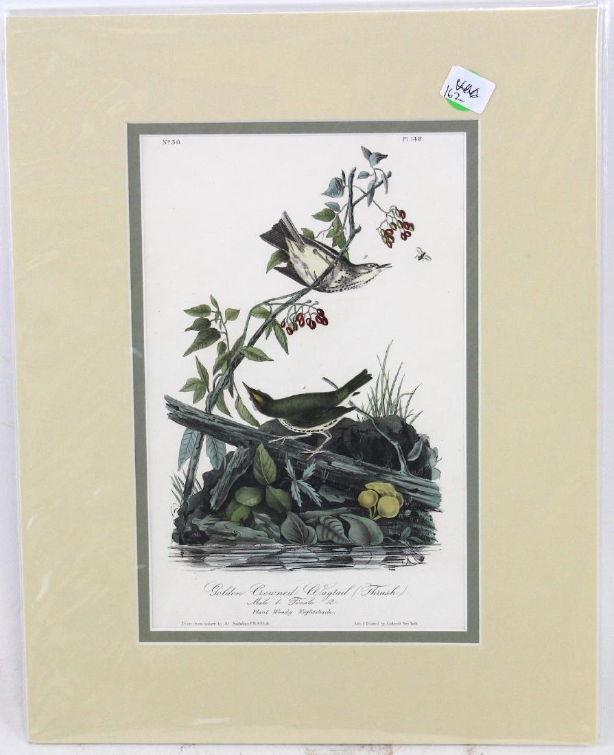 J.J. Audubon. Octavo. Golden-Crowned Wagtail Thrush