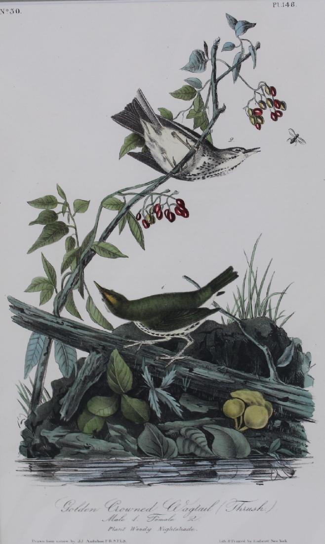 J.J. Audubon. Octavo. Golden-Crowned Wagtail Thrush - 2