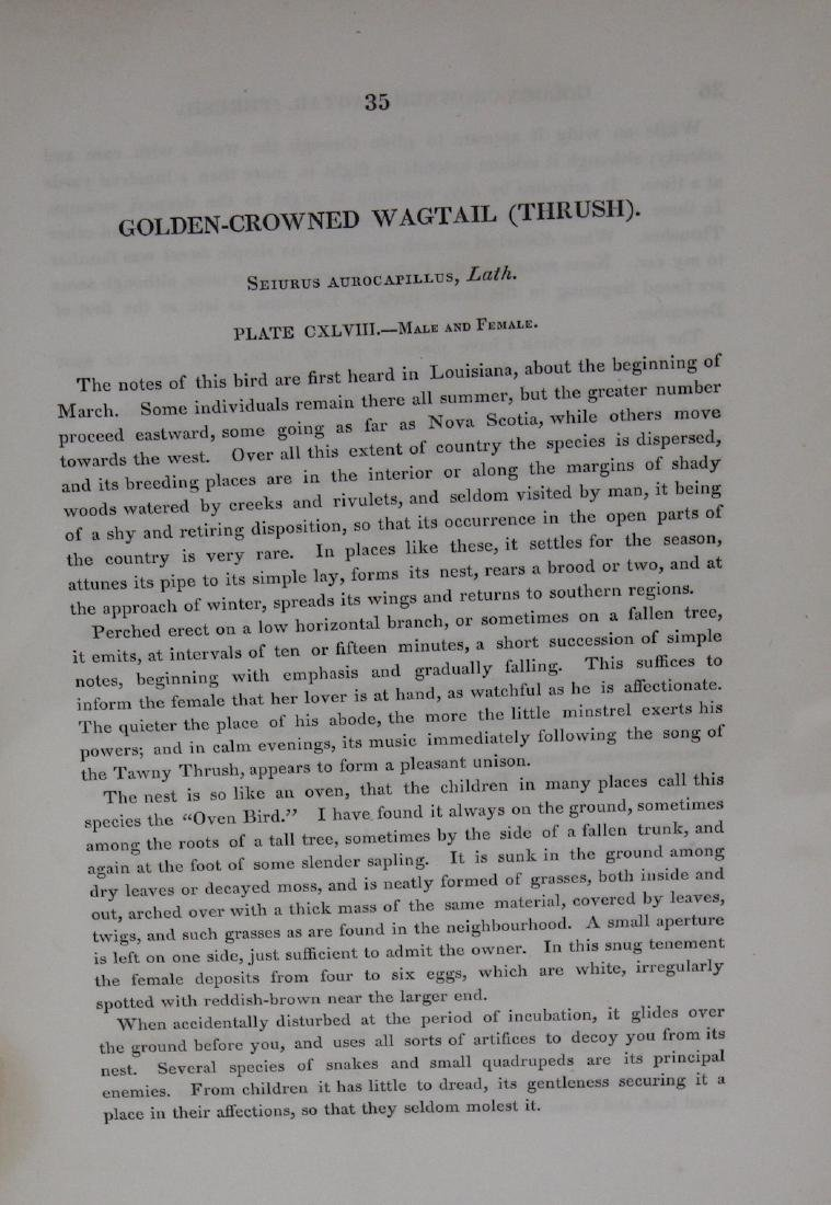 J.J. Audubon. Octavo. Golden-Crowned Wagtail Thrush - 3