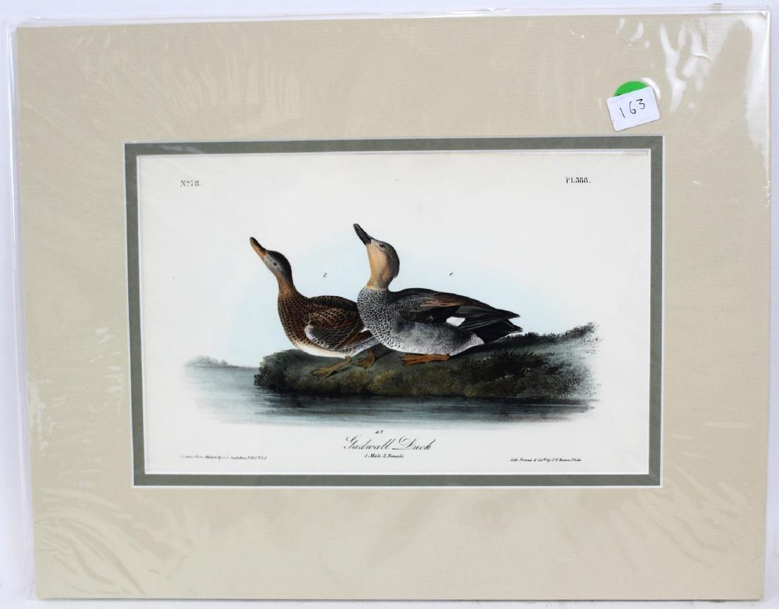 J.J. Audubon. Octavo. Gadwall Duck No.388