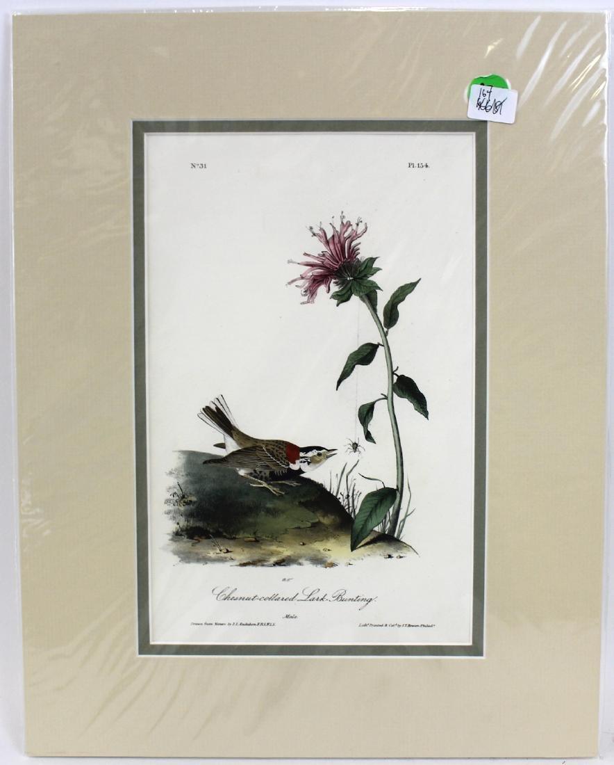 J.J. Audubon. Octavo. Chestnut-Collard Lark-Bunting