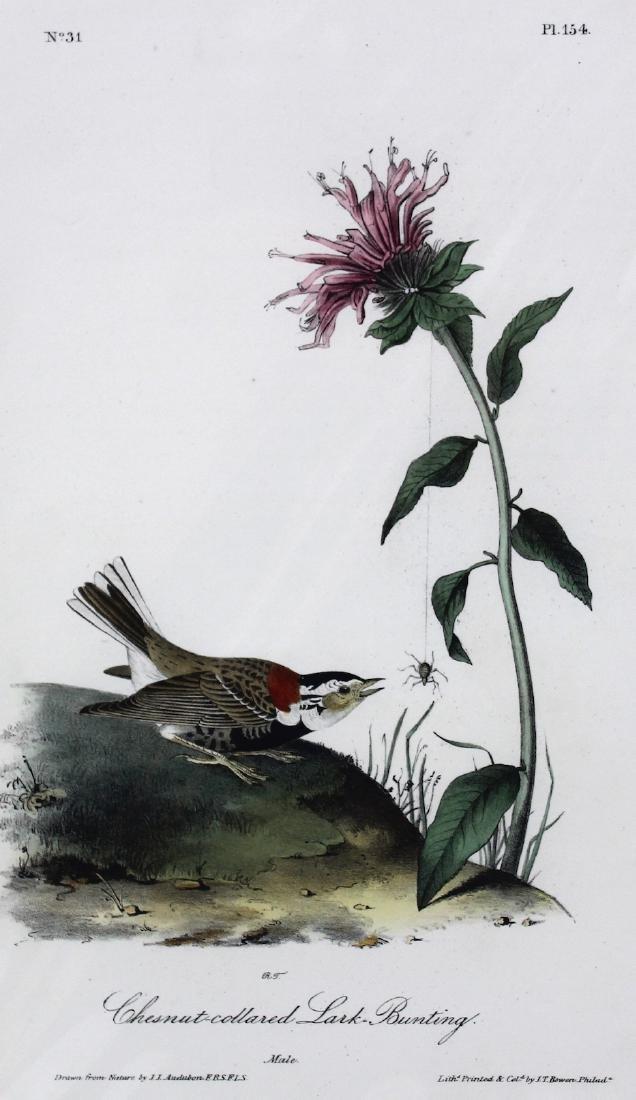 J.J. Audubon. Octavo. Chestnut-Collard Lark-Bunting - 2