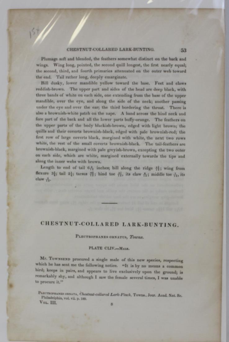J.J. Audubon. Octavo. Chestnut-Collard Lark-Bunting - 3