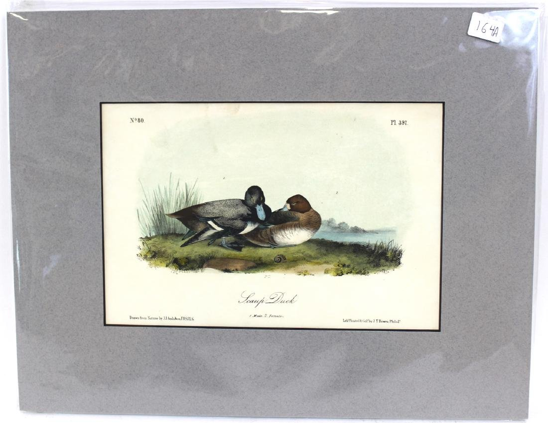 J.J. Audubon. Octavo. Swamp Duck