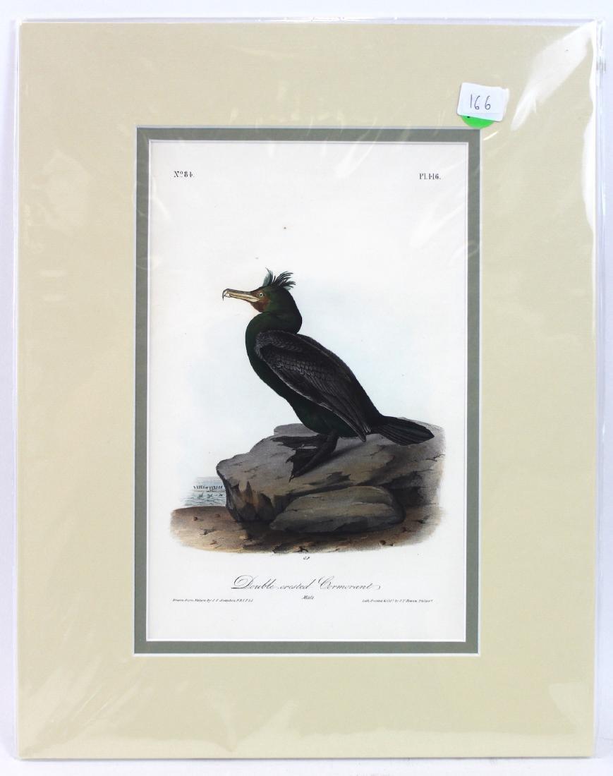 J.J. Audubon. Octavo. Double-Creasted Cormorant