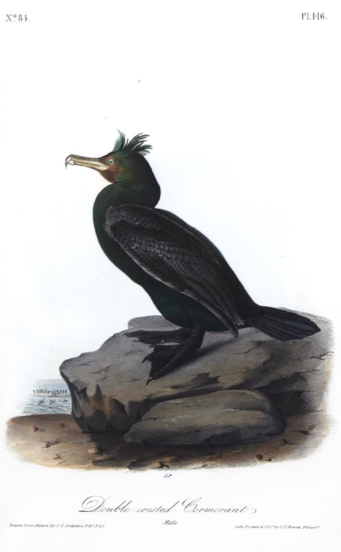 J.J. Audubon. Octavo. Double-Creasted Cormorant - 2