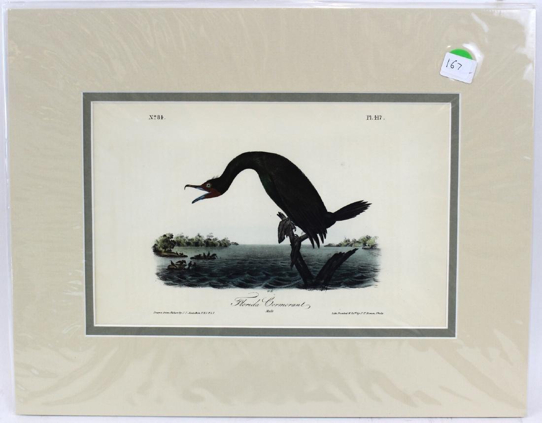 J.J. Audubon. Octavo. Florida Cormorant