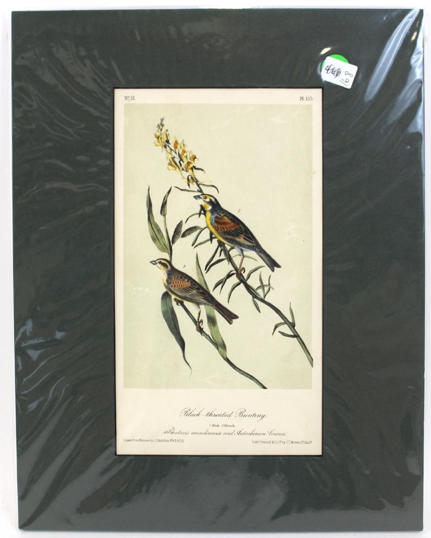 J.J. Audubon. Octavo. Black Throated Bunting