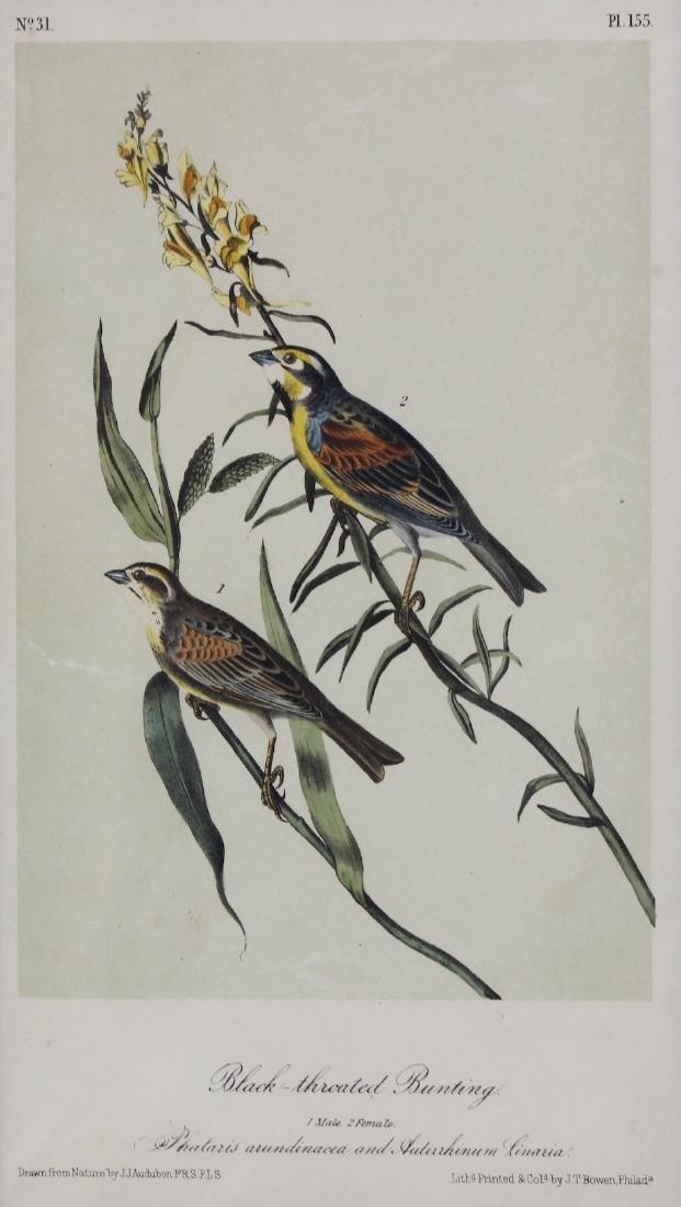J.J. Audubon. Octavo. Black Throated Bunting - 2