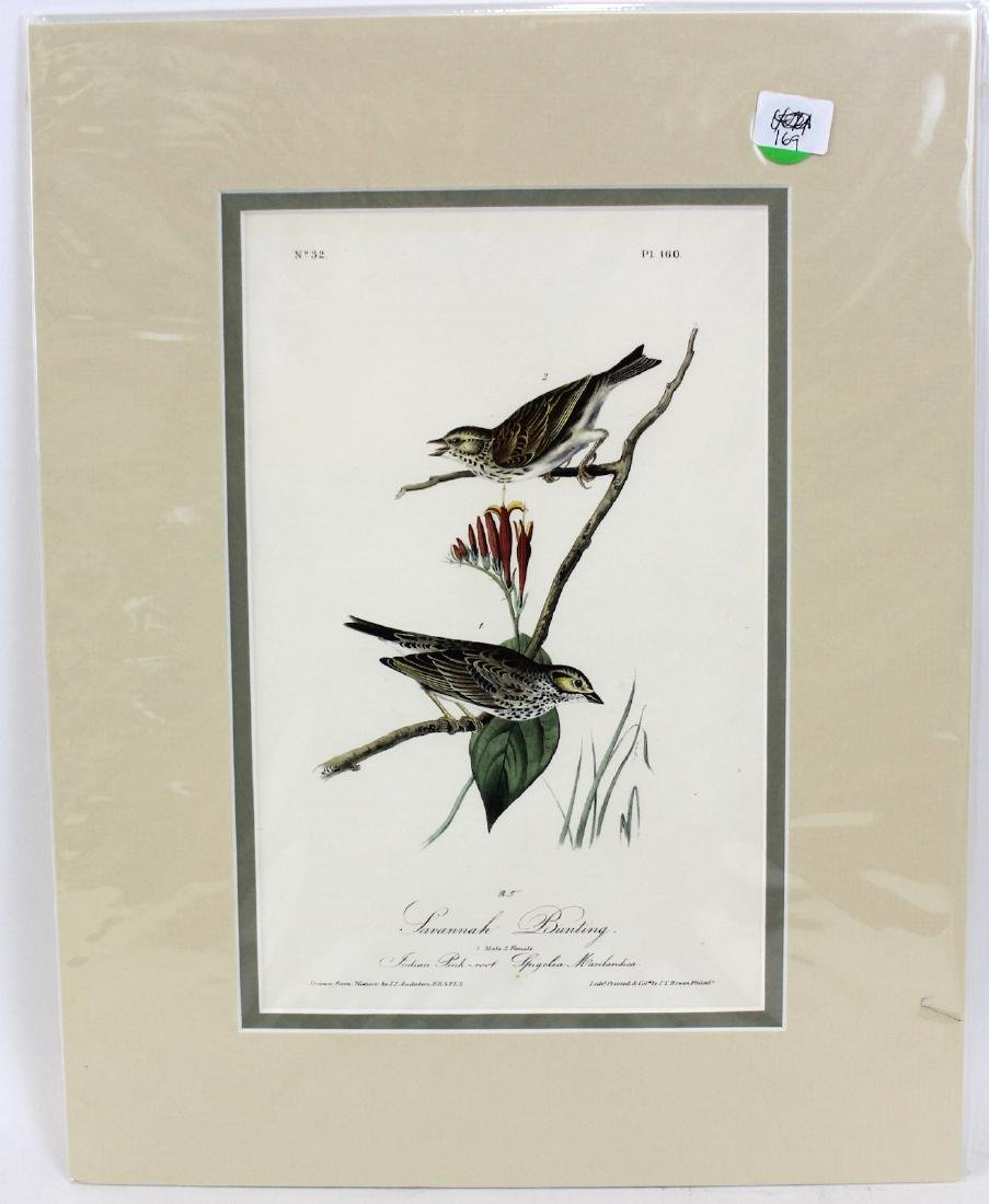 J.J. Audubon. Octavo. Savannah Bunting