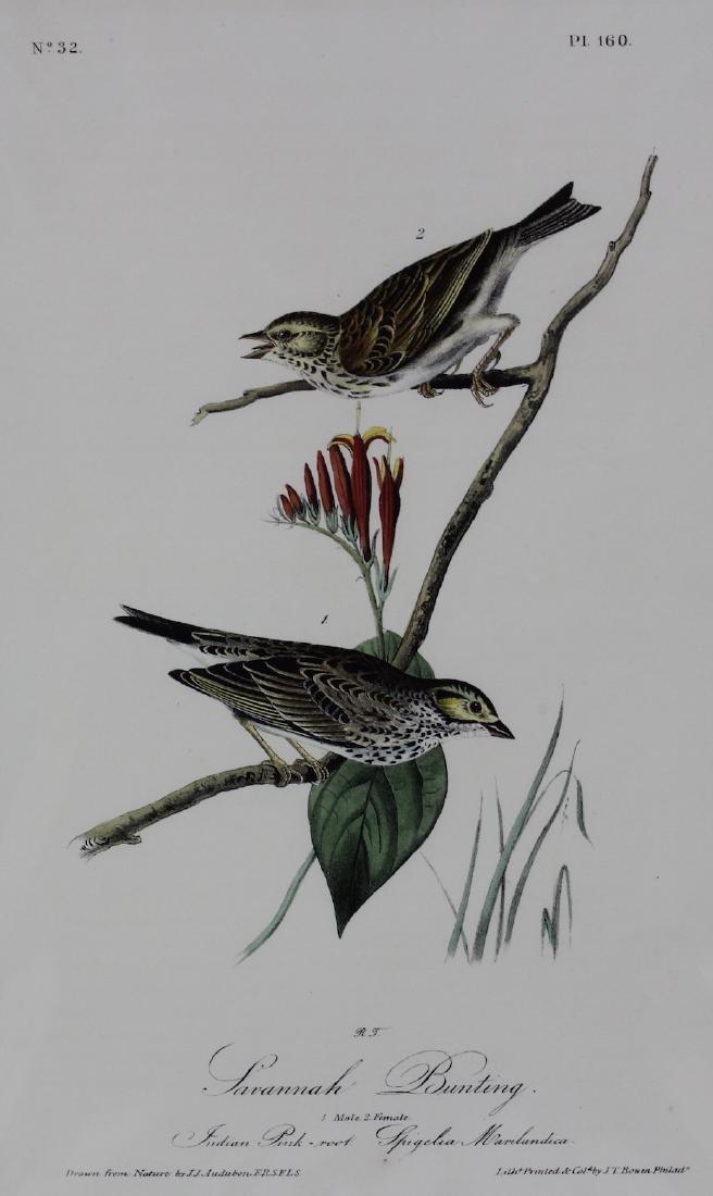 J.J. Audubon. Octavo. Savannah Bunting - 2