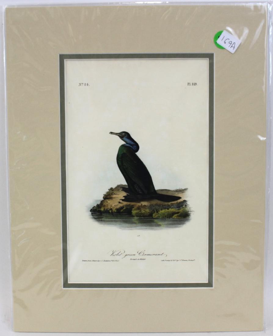 J.J. Audubon. Octavo. Violet-Green Cormorant