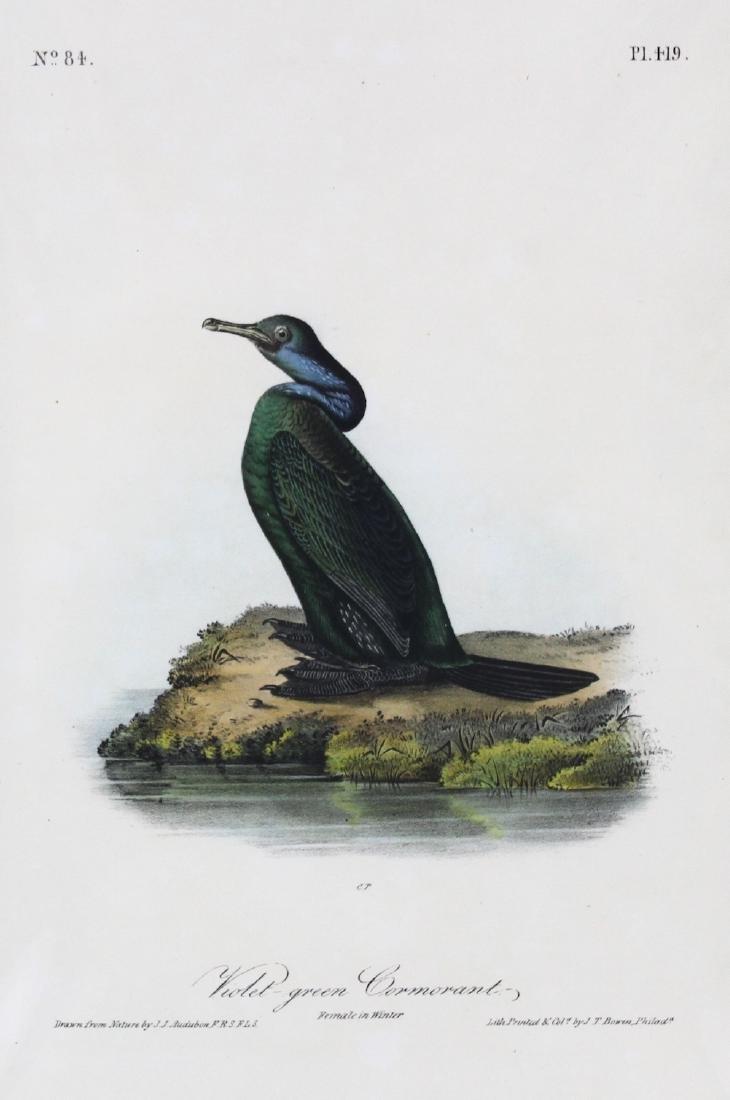 J.J. Audubon. Octavo. Violet-Green Cormorant - 2