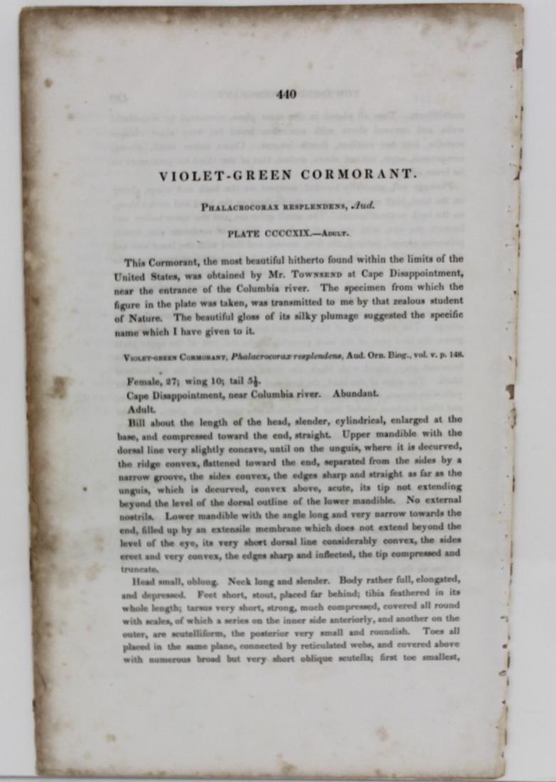 J.J. Audubon. Octavo. Violet-Green Cormorant - 3