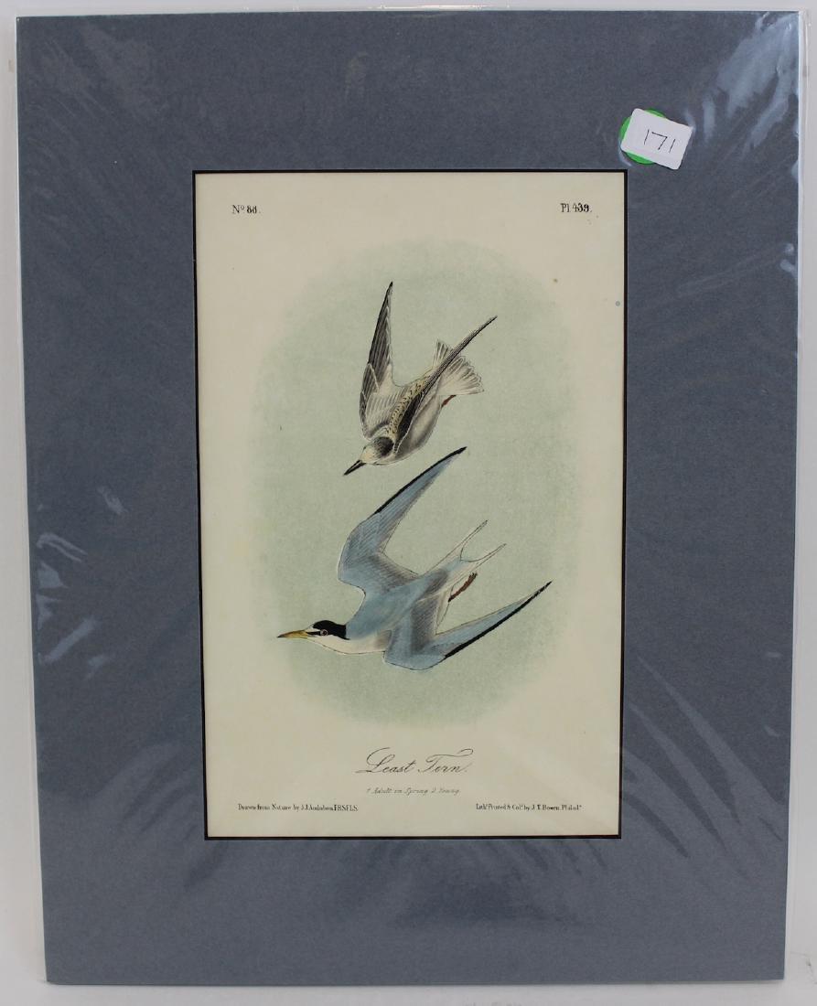 J.J. Audubon. Octavo. Least Tern