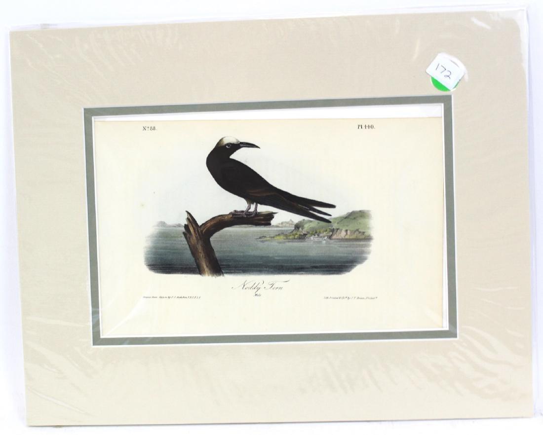 J.J. Audubon. Octavo. Noddy Tern