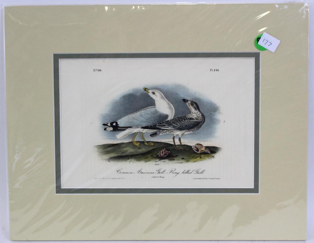 J.J. Audubon. Octavo. Common American Gull Ring-Billed