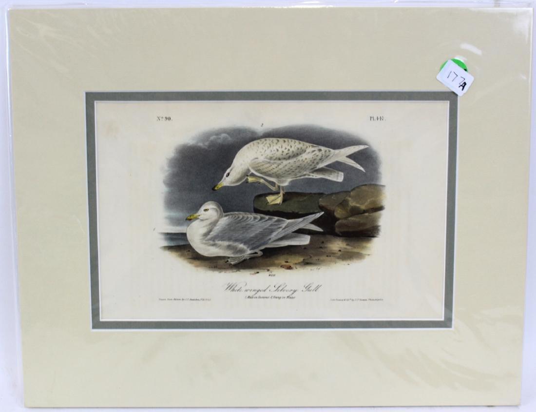 J.J. Audubon. Octavo. White-Winged Silvery Gull